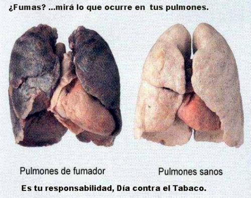 de empresas de servicios de salud Día mundial sin Tabaco View Image