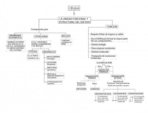 mapa conceptual sobre la célula