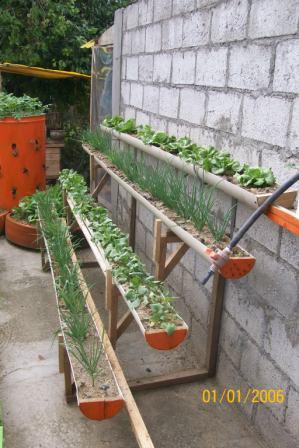 Siembra vertical - Agricultura Urbana